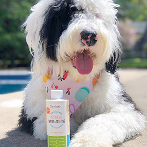 Our unique combination of Oxygene and zinc will send dog bad breath straight to the doghouse.