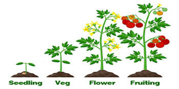 Suit for all stages of plants growth