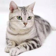 cat fur comb