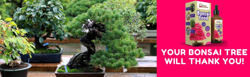 bonsai tree compost multipurpose feed house indoor plant food grow top soil all purpose grow buddha