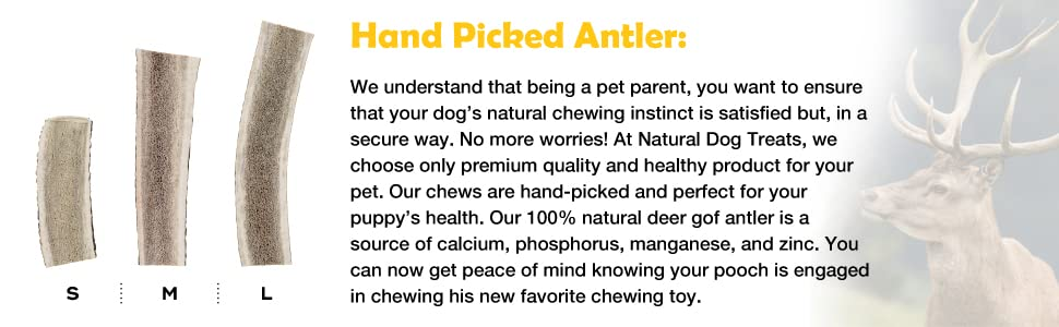 These hand picked antler are source of rich nutrients