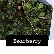 Bearberry