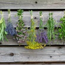 Harvested organic herbs