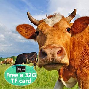 Free 32GTF card