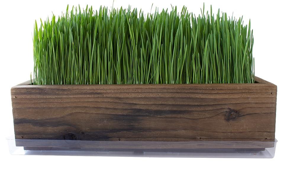 barnwood style planter box wheatgrass kit handy pantry grow your own DIY how to grow wheatgrass