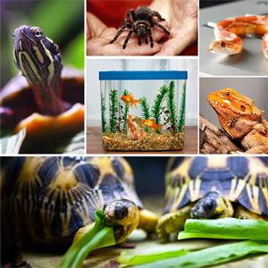 Liuer 2PCS Manta Termica Reptiles Ajustable Reptil Heat Mat con Control De Temperatura Reptiles-Estera de Calefacción para Reptiles,Tortugas,Serpientes,Lagarto,Gecko,Araña (5W): Amazon.es: Productos para mascotas