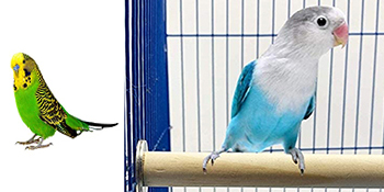 Bird Toys Parrot Toys