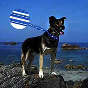 Collier de chien LED