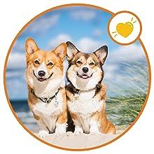 dog skin irritation treatment dog shedding supplement skin soother dog shedding cat cold medicine