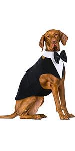 Dog Tuxedo Suit