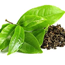 Camellia Sinensis Leaf Extract Green Tea Extract