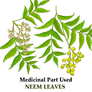 Organic Neem Powder Neem Powder Organic Pure Neem Leaf Powder azadirachta indica Skin Care Detox