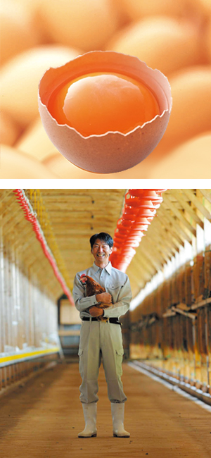 九州産「有精卵黄」を使用