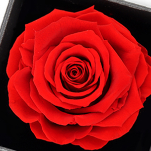 Preserved Real Rose