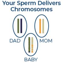 male fertility pill, male preconception vitamin, FertilAid, two in one pill