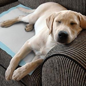 On the mat, or pet sofa
