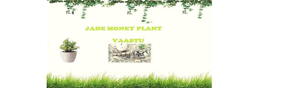 Jade Plant Achieve More Practical Purposes