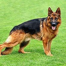 dog effrctiveness