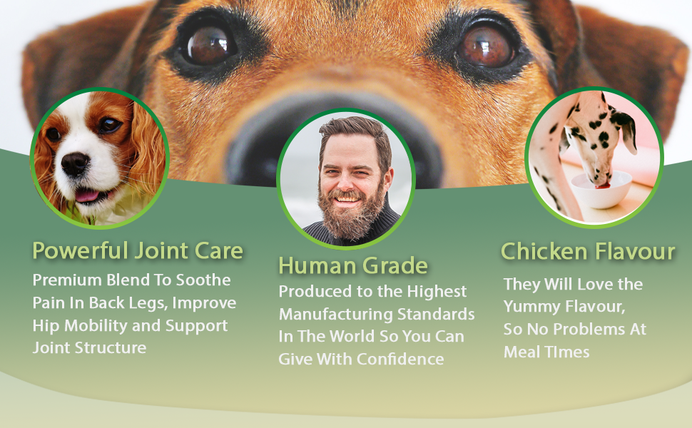 dog joint care supplements