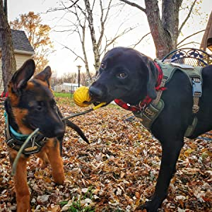 Army Green Dog harness