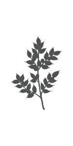 raw liquid nascent iodine seed nested center group quemador grasa thyroid naturals vegan safe b12