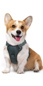 Dog Harness, No Pull Dog Vest Harness with Shock-Absorbing Bungee Straps