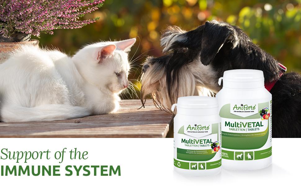 AniForte MultiVETAL Multivitamínico para perros y gatos 250 comprimidos – Multivitamínico y nutrientes naturales para un suministro óptimo, ayuda para ...