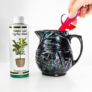liquid fiddle leaf fig fertilizer
