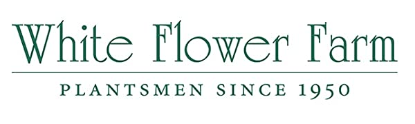white flower farm logo yayyyy i love kristin shes amazing what would i do without her #jobless