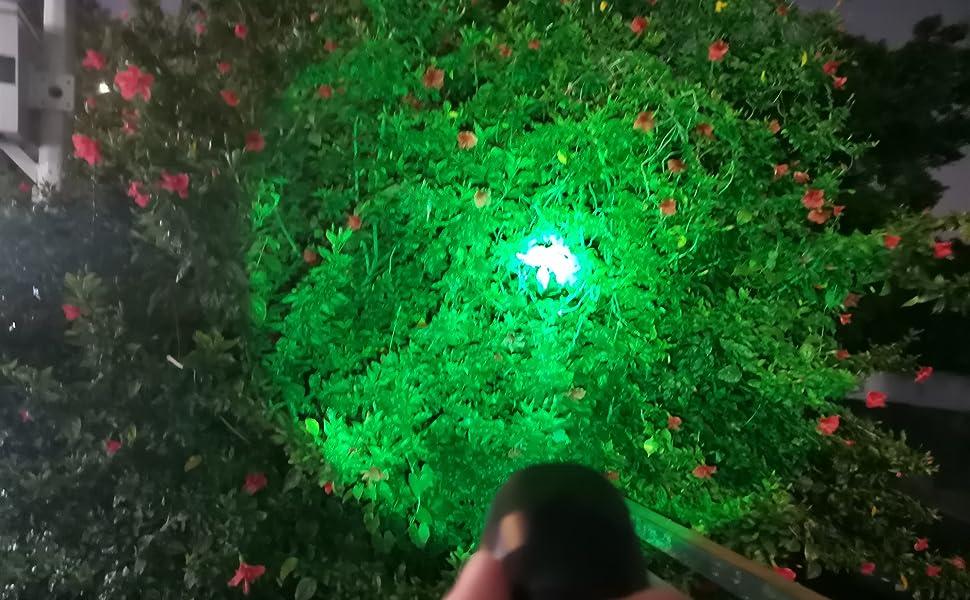 light up woods