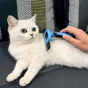 shedding cat hair