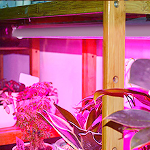 full spectrum grow light grow light bulbs for indoor plants