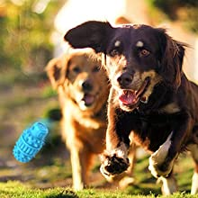 Interactive With Your Dog &Training