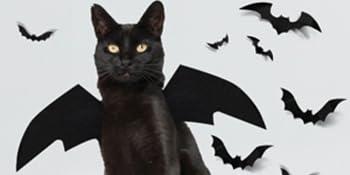 cute cat bat wings