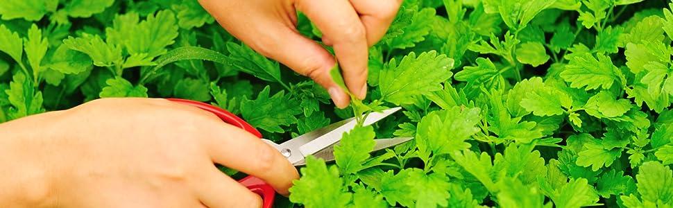 health embassy, herbs, dried herbs, organic herb, herbal tea, cold pressed oil, herbal infusion, tea