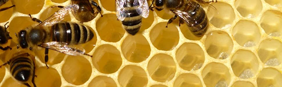 Bienenwachs Frombee