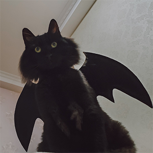 A cat wearing the Halloween cat costume.