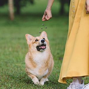 pet grooming dog grooming