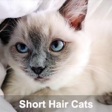 deshedding brush for short haired cats