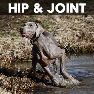 hip and joint supplement