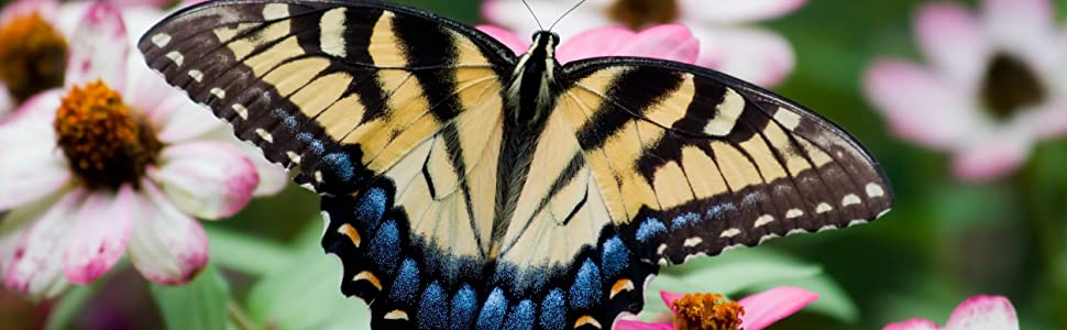 Butterfly Attracting Wildflower Seeds For Planting
