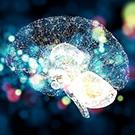 脳の神経回路