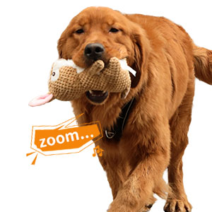 squeaky dog toys