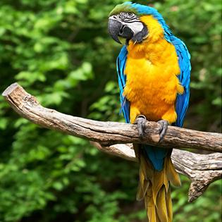 bird perches toy