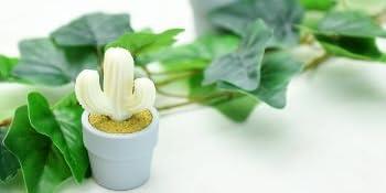 Little cute cactus