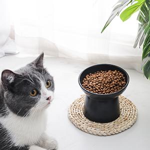 pet bowls for cat