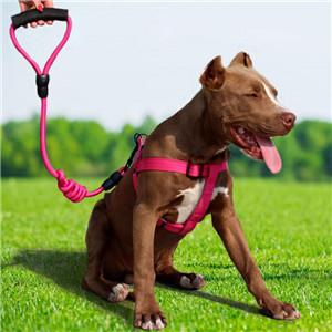 Dog Leash......