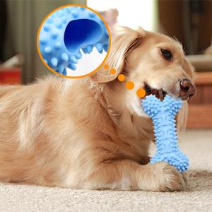 Dog molars