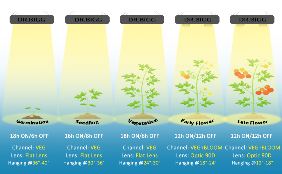 led grow light hanging height and grow stages