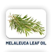 Melaleuca Leaf Oil